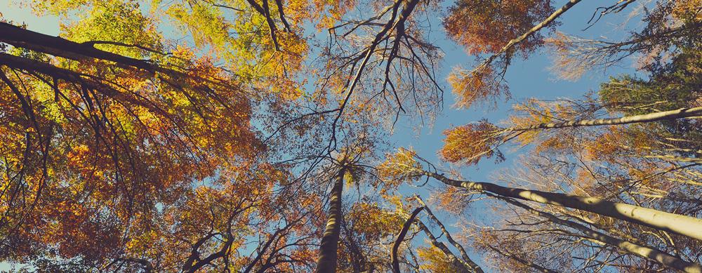 Der findes over 23.000 træsorter i verdenen.